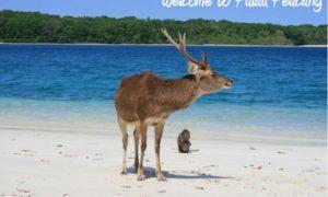 Pulau Peucang, Keindahan Alam Tiada Tara Di Ujung Jawa