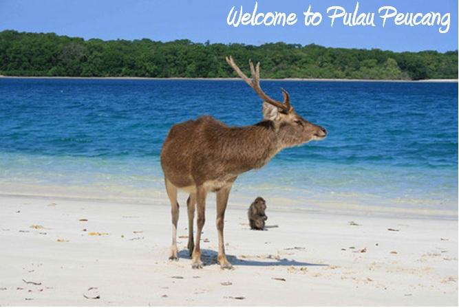 welcome to pulau peucang