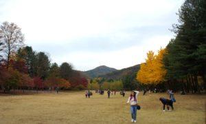 Keindahan Objek Wisata Alam Pulau Nami di Korea Selatan